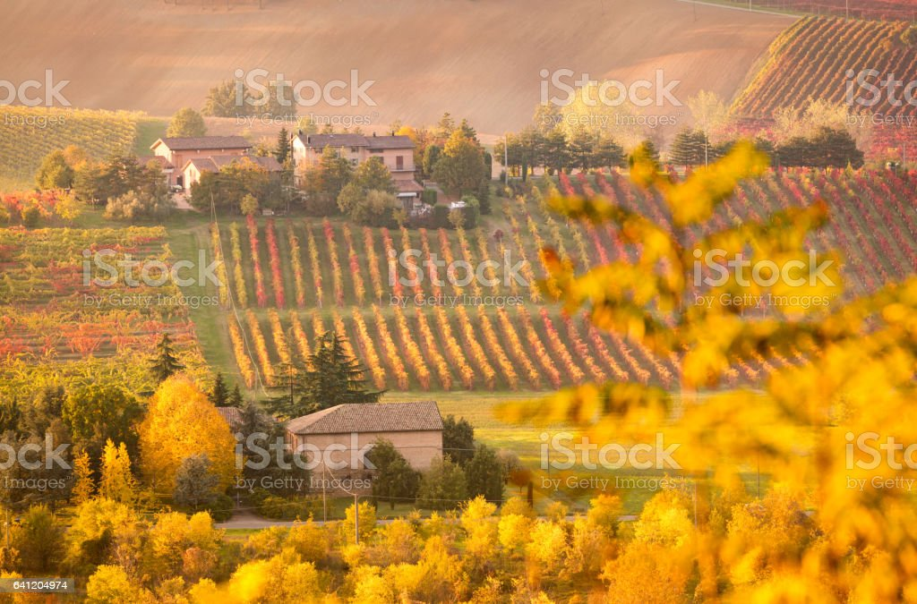 Castelvetro, Modena, Italy. Vineyards stock photo