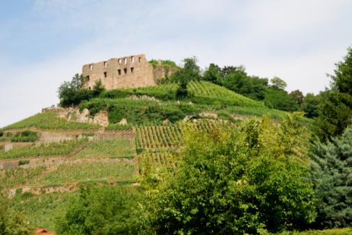 Castle on a vineyard