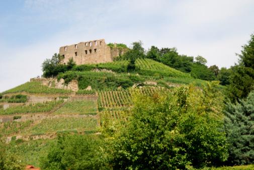 Castle on a vineyard