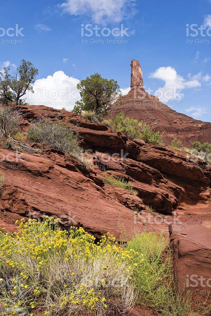 Castleton Tower and Flowers Moab Utah royalty-free stock photo