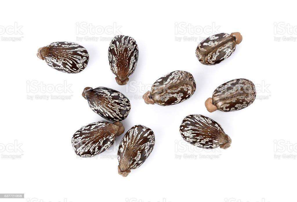 Castor beans on white background stock photo