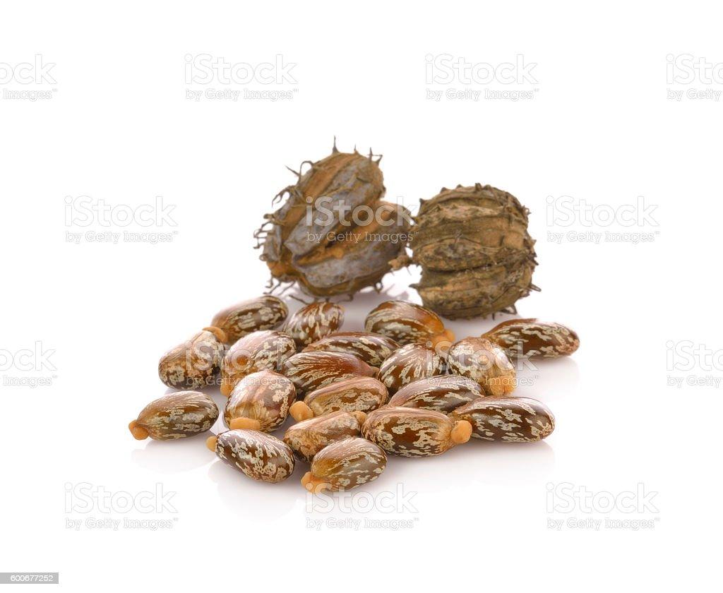 Castor oil seeds (Ricinus Communis) isolated on white stock photo