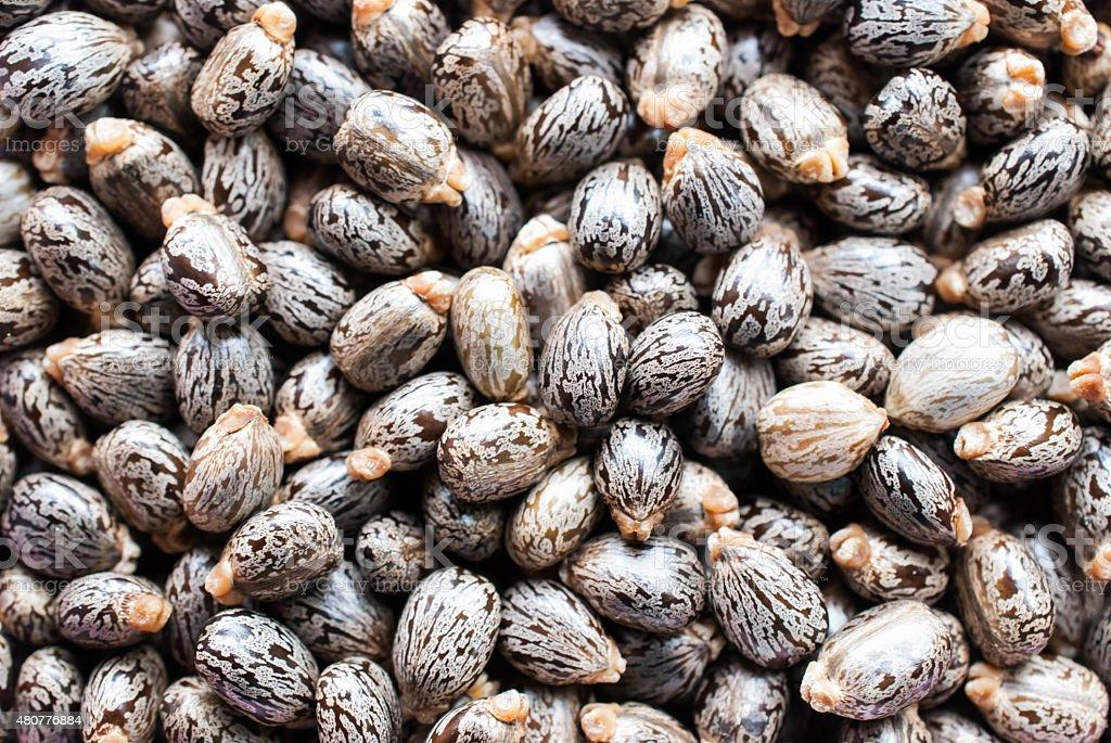 Castor oil seeds-ricinus communis stock photo