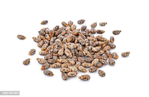 istock Castor seeds on white background 595765484