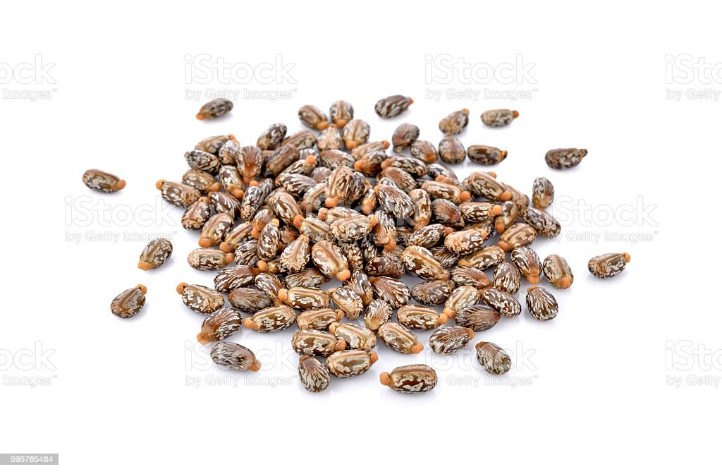 Castor seeds on white background stock photo
