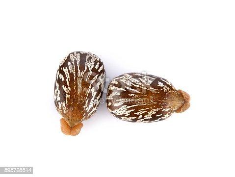 istock Castor seeds on white background 595765514