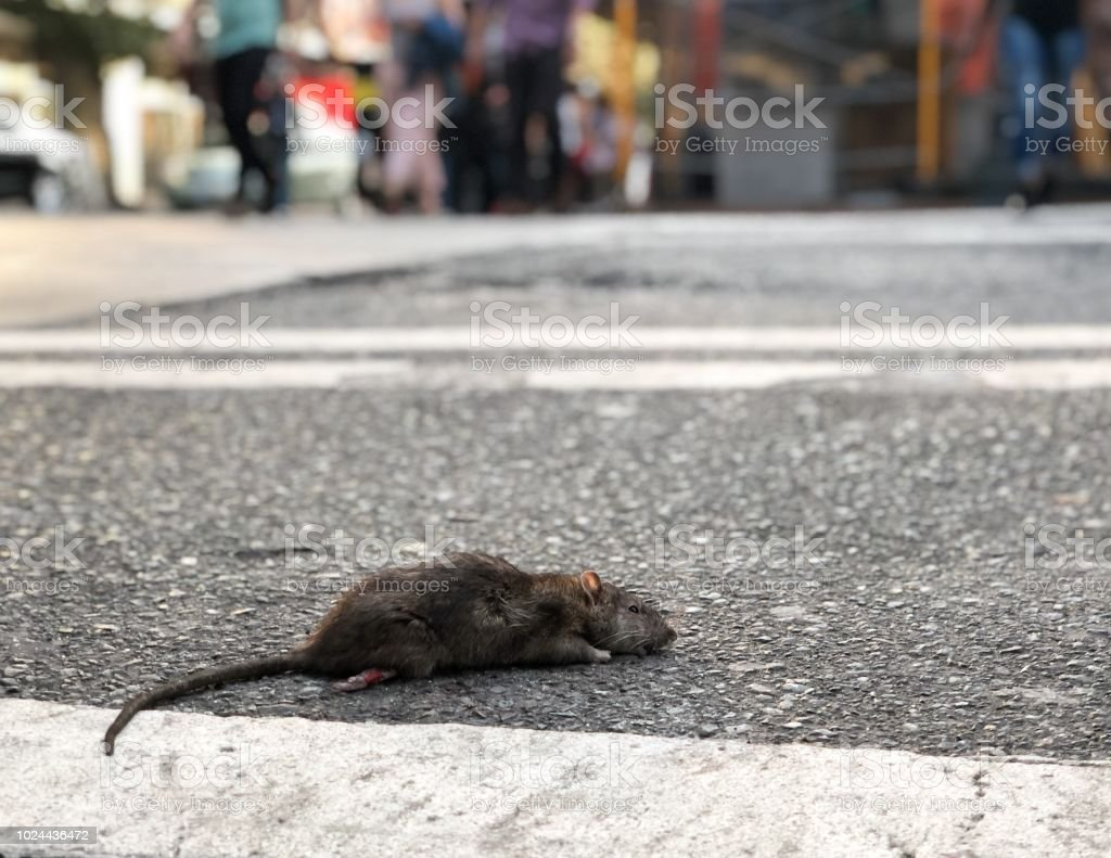 Casualty of the streets stock photo