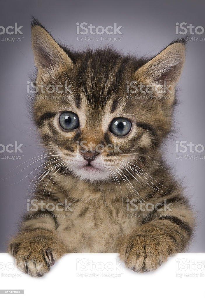 Cat above white banner stock photo