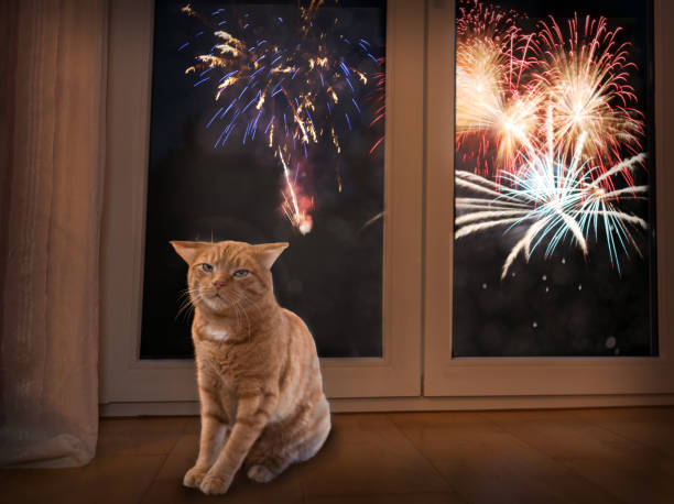 Cat afraid of firework Cat afraid of loud noise. Fireworks are stress for pets and animals.  Firework light outside in background. scared cat stock pictures, royalty-free photos & images