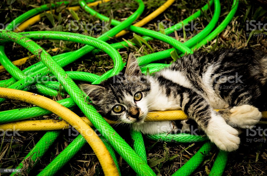 Cat Among Hoses Stock Photo - Download Image Now - iStock