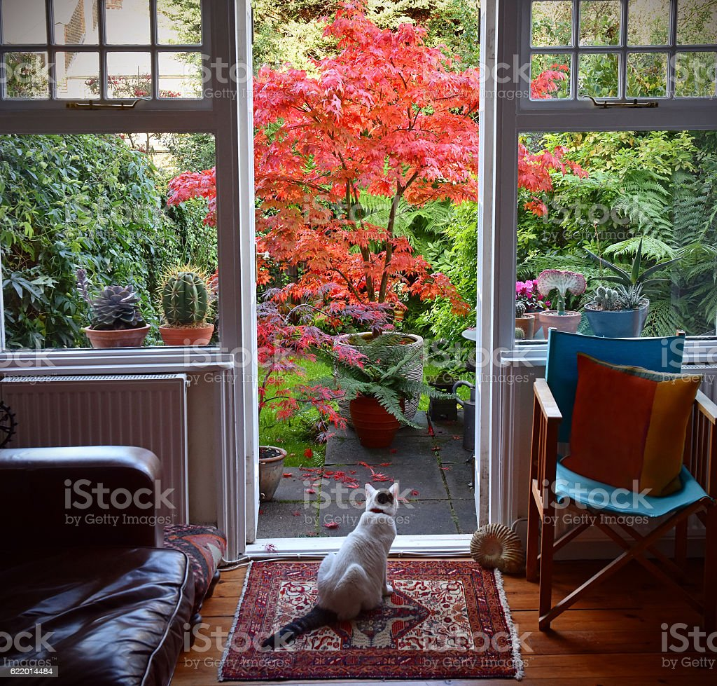 Cat and Acer stock photo