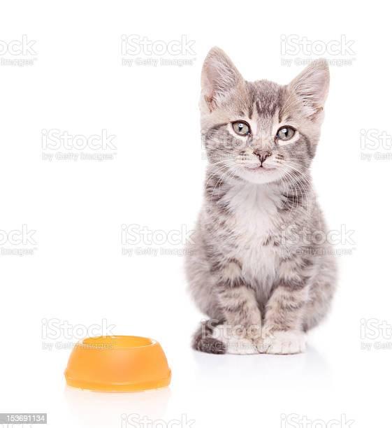 Cat and an empty food bowl next to it picture id153691134?b=1&k=6&m=153691134&s=612x612&h=ovlsdtf5xejqcs0x9e3ztguarzwhol lsamm ncgza4=