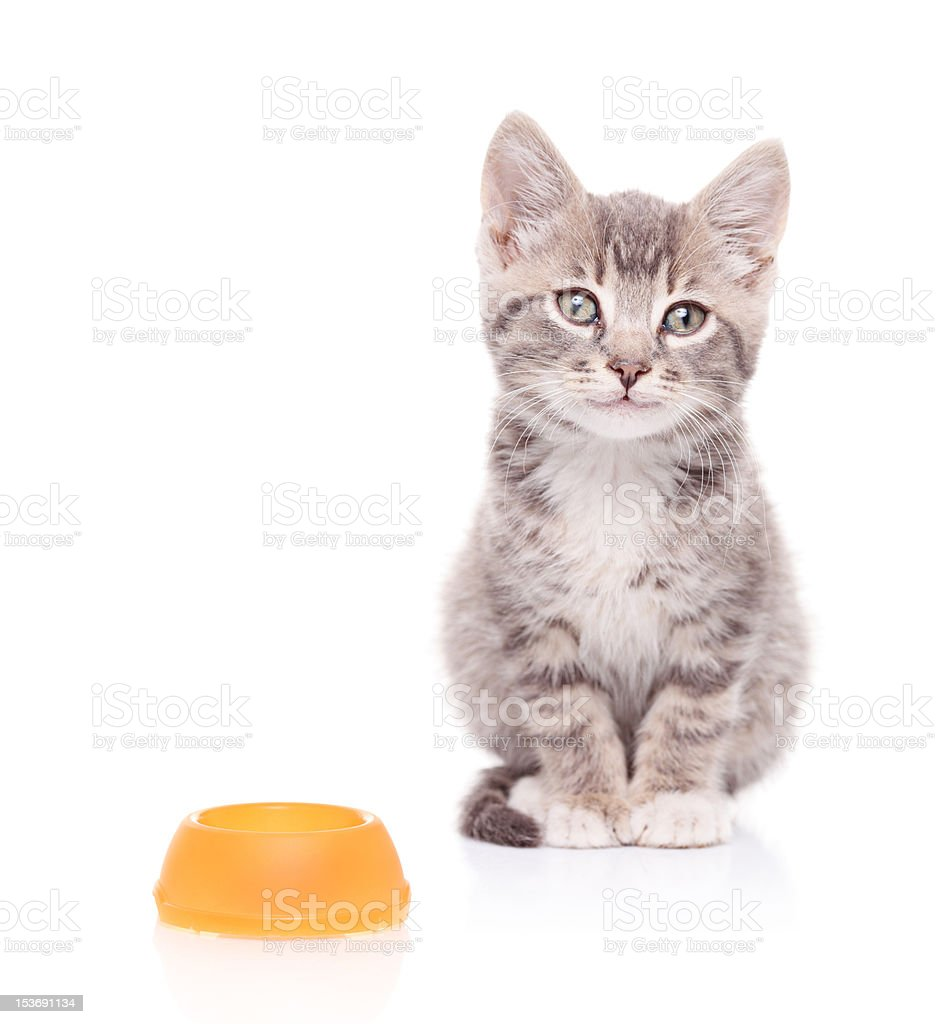 Cat and an empty food bowl next to it stock photo