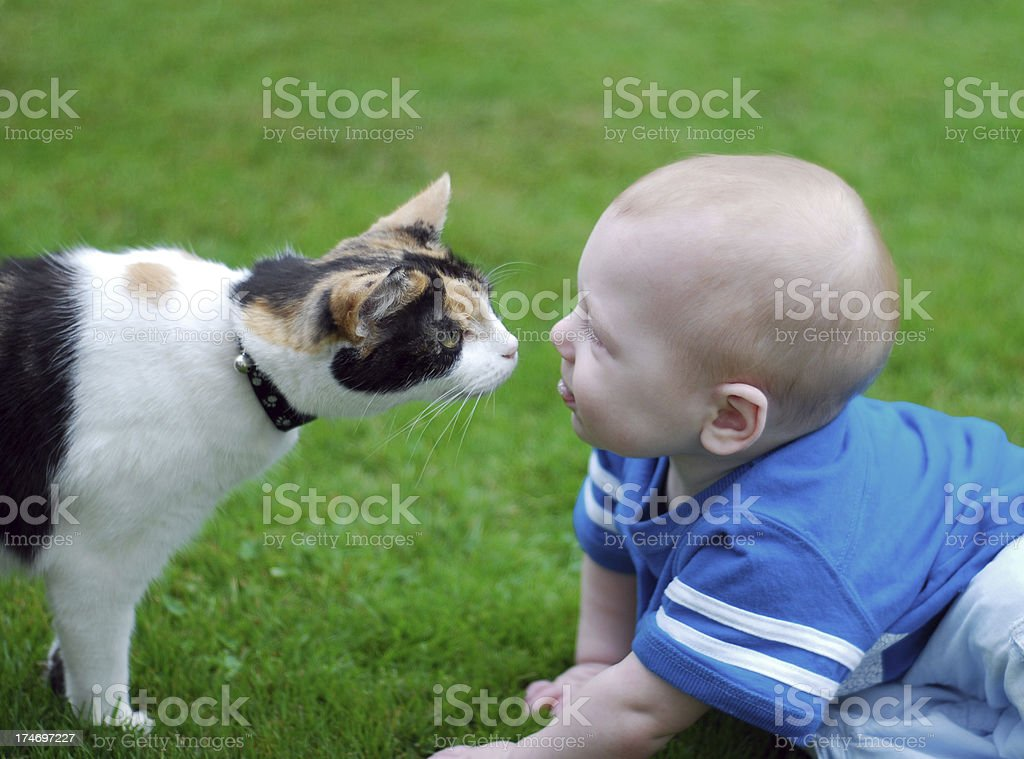 Cat and baby kiss stock photo