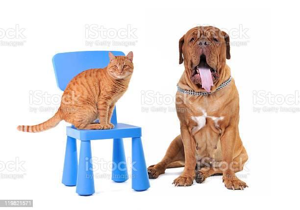 Cat and big dog picture id119821571?b=1&k=6&m=119821571&s=612x612&h=x b9nal7kla duklh9g0xk4vyhynonttauu4pyvixsi=