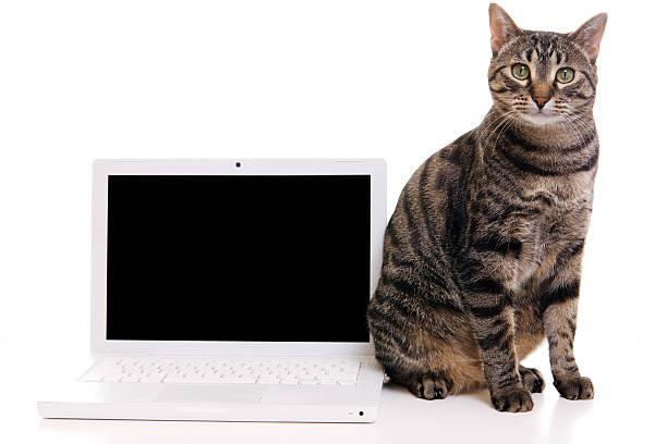 Cat and blank computer screen picture id157423729?b=1&k=6&m=157423729&s=612x612&w=0&h=5skuecxascn6q7zge3zgjzmh7xj 41wtxlyqvc4 gqo=