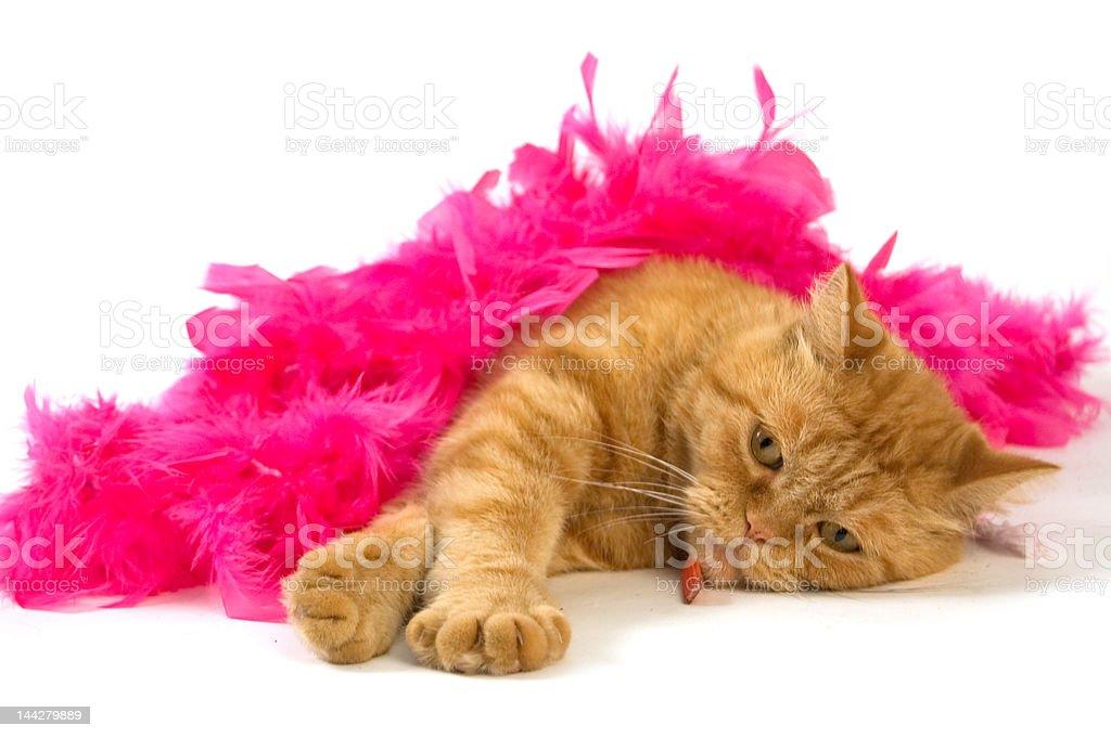 cat and boa royalty-free stock photo