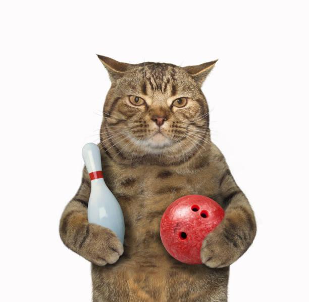 Cat and bowling picture id687418700?b=1&k=6&m=687418700&s=612x612&w=0&h=oveu4kyn6gejdzeic945b3uwtst lmfqdxtrylbwad8=