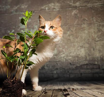 Cat and bush of Bay Tree.