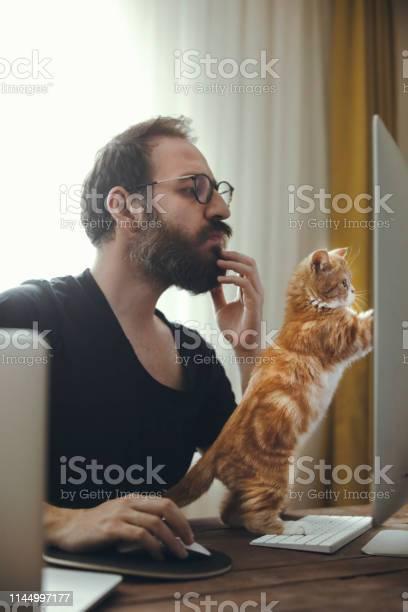 Cat and business picture id1144997177?b=1&k=6&m=1144997177&s=612x612&h=5upo6mex0xdjjxgrzbp hved0tzkwwd6i yynjiul9w=