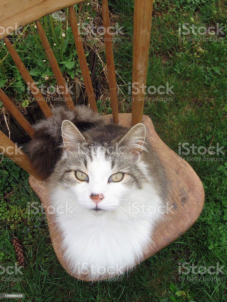 cat and chair royalty-free stock photo