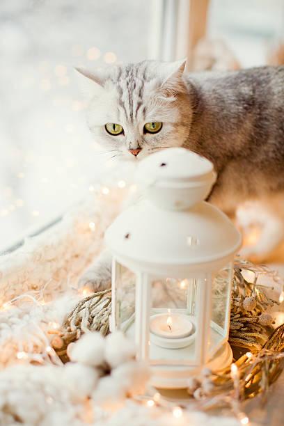 Cat and christmas decorations picture id628078356?b=1&k=6&m=628078356&s=612x612&w=0&h=3qbgcovqfhw42xvvy235zylfxpl9p6navvsdgkwkyrc=