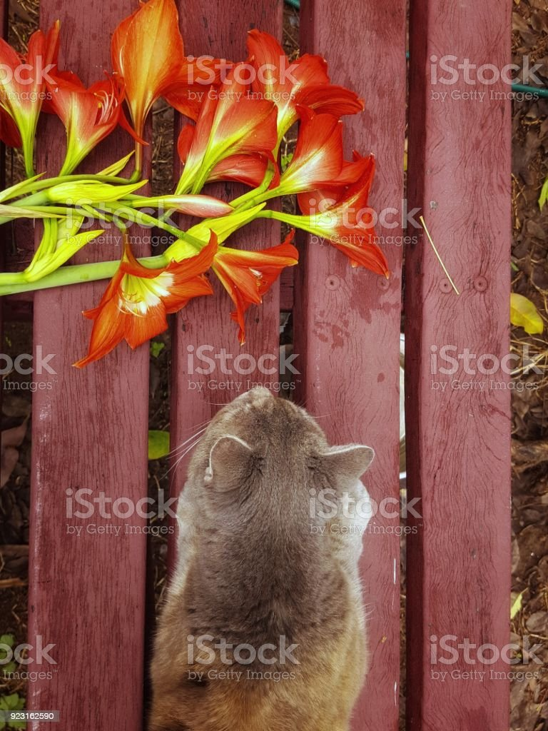 Pleasing Cat And Cut Lily Flowers On Rustic Outdoor Garden Bench In Inzonedesignstudio Interior Chair Design Inzonedesignstudiocom