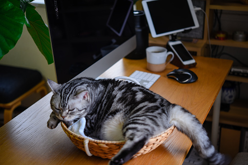 Cat and desk work