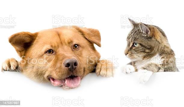 Cat and dog above white banner picture id147057697?b=1&k=6&m=147057697&s=612x612&h=fikfxzdc8bmy qou4 oygcc5m gsnapwsomahaomyjc=