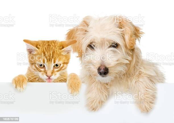 Cat and dog above white banner picture id160876199?b=1&k=6&m=160876199&s=612x612&h=yykoilpbkxauwx6t7fhoycvjxg7rkpl05hcww4rbdru=
