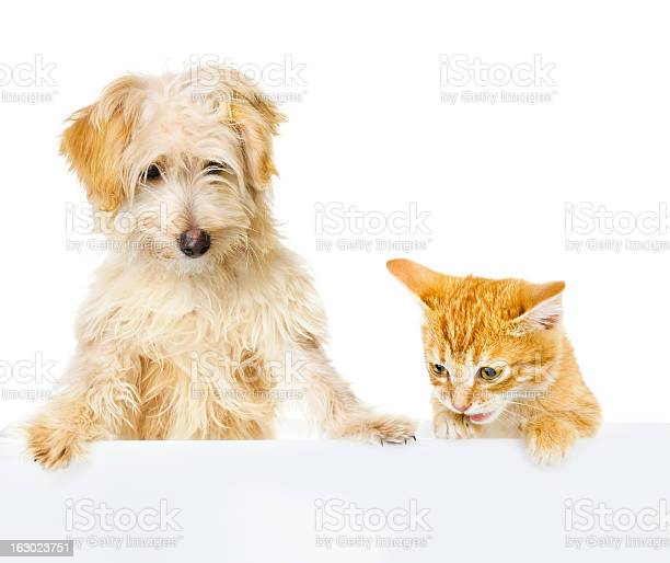 Cat and dog above white banner picture id163023751?b=1&k=6&m=163023751&s=612x612&h=ysgtaw7lzlvb2donz9mjtib36x7nglkhkpfr15bzh74=