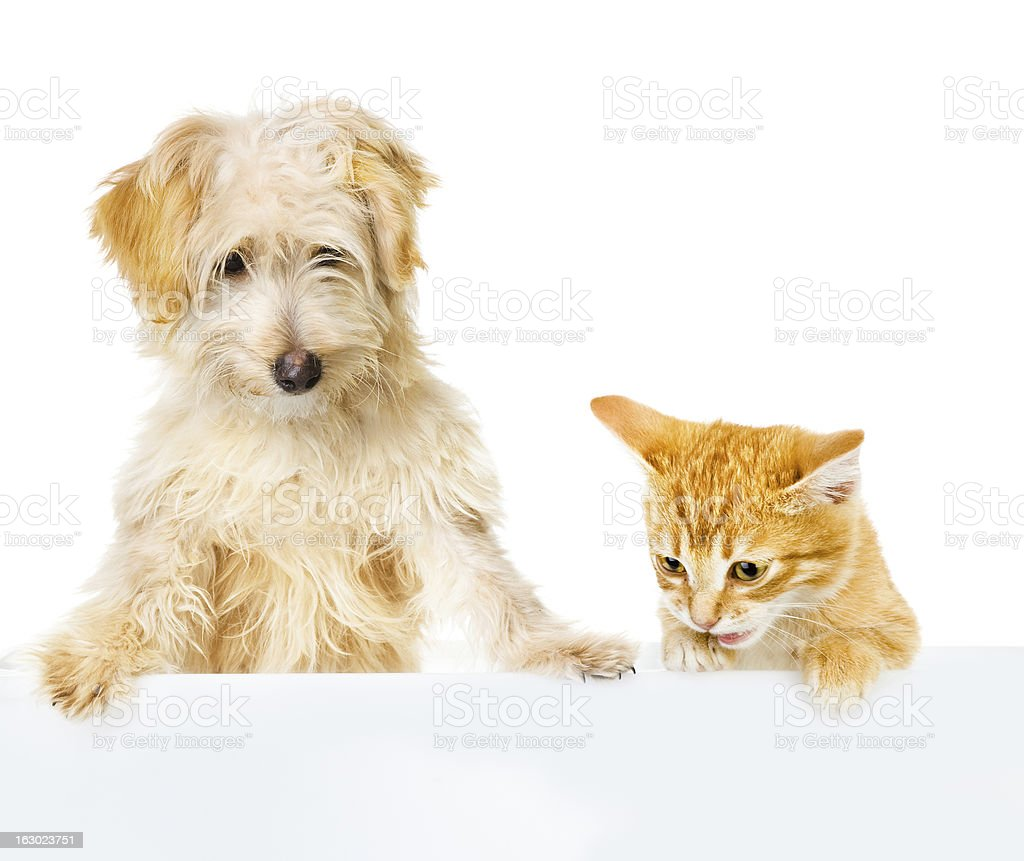 Cat and Dog above white banner stock photo