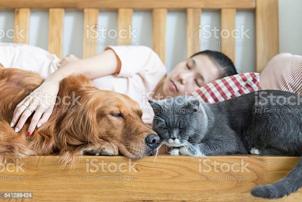 Cat and dog and girl sleeping picture id541299424?b=1&k=6&m=541299424&s=612x612&h=5zgjqtlnh79p6ijcbniol8kuu cftee645p7kai9ieg=