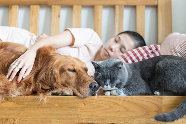 Cat and dog and girl sleeping picture id541299424?b=1&k=6&m=541299424&s=612x612&w=0&h= znuqzyase2ish20tqd7dq1ingowgv xitcb9suptr4=