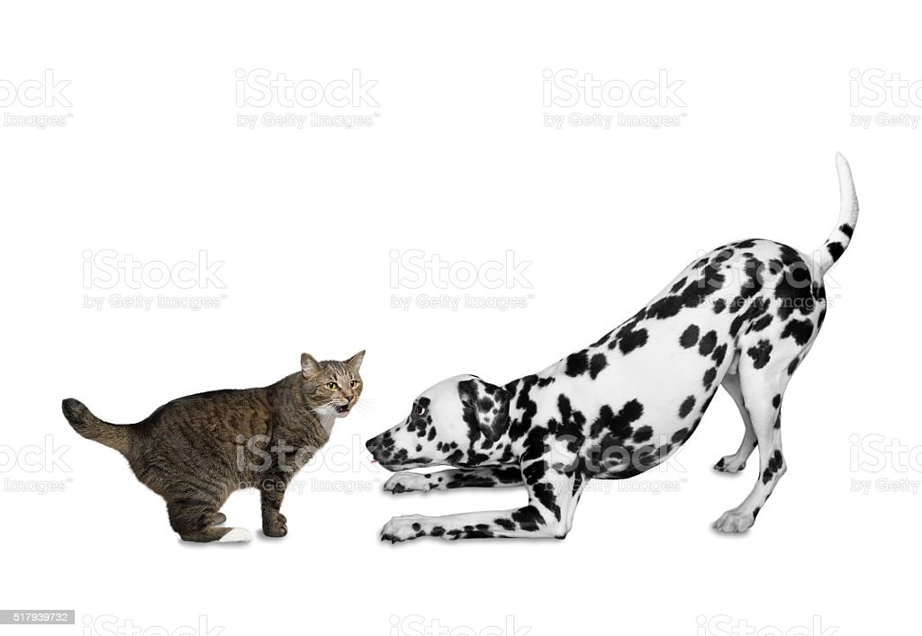 Cat and dog are going to play stock photo