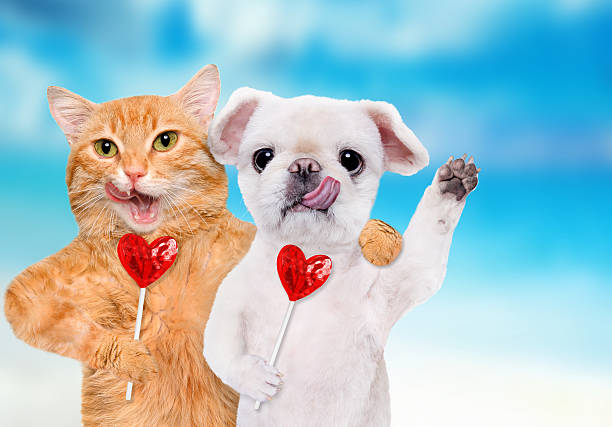 Cat and dog are holding candy hearts with their paws picture id635868830?b=1&k=6&m=635868830&s=612x612&w=0&h=lnws5zchvmo8hvax8ayq50yglf dobmgcq1nmmzfvqy=
