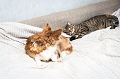 istock Cat and dog are lying on the bed and looking at each other. Animal friendship concept. 1254003334