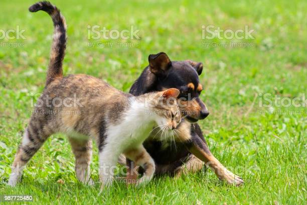 Cat and dog are touching their heads beautiful animal friendship cat picture id987725480?b=1&k=6&m=987725480&s=612x612&h=crxv91kxeerfwckt0fttphwdgi1zyyqtpl7j7h7pup8=