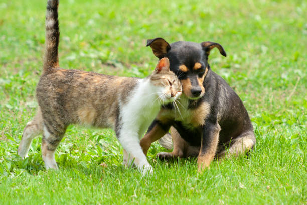 Cat and dog are touching their heads beautiful animal friendship cat picture id993020850?b=1&k=6&m=993020850&s=612x612&w=0&h=7vm8c ycnwjvgifw7s1mekmxvowvzybxnohaubw4vqc=
