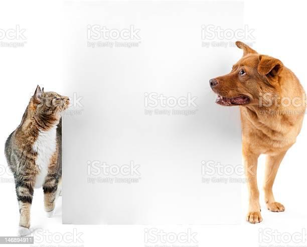 Cat and dog around banner picture id146894911?b=1&k=6&m=146894911&s=612x612&h=dyojjkg0yngidcuoexkf1t7fzleqjfnblvo hstp4ew=