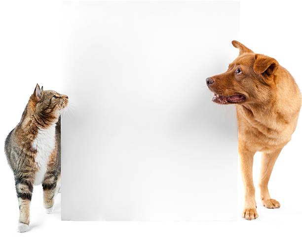 Cat and dog around banner stock photo