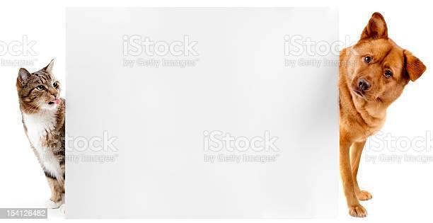 Cat and dog banner picture id154126482?b=1&k=6&m=154126482&s=612x612&h=ii4vtqnoin8bfyfekr8xkmzd5w5dvo tfgydzspc8ws=