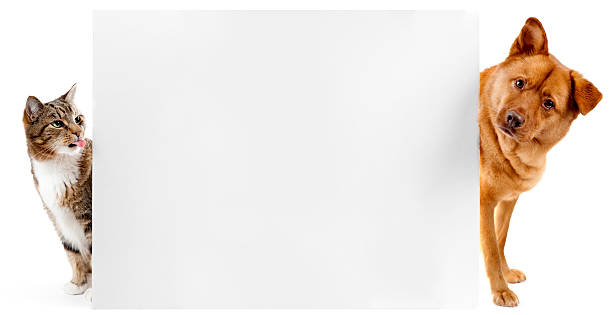 Cat and dog banner stock photo