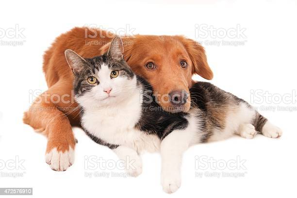 Cat and dog best friends picture id472576910?b=1&k=6&m=472576910&s=612x612&h=emq8u2zm6j4edyy2zmuhjpvgvbdhcp ukxd wkjkqak=
