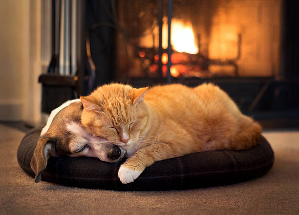 Cat and dog by the fireplace picture id505769981?b=1&k=6&m=505769981&s=612x612&w=0&h=poxxatdpa3wfz2ssbnd9dc1imtefnmo9ncbtbilmmok=