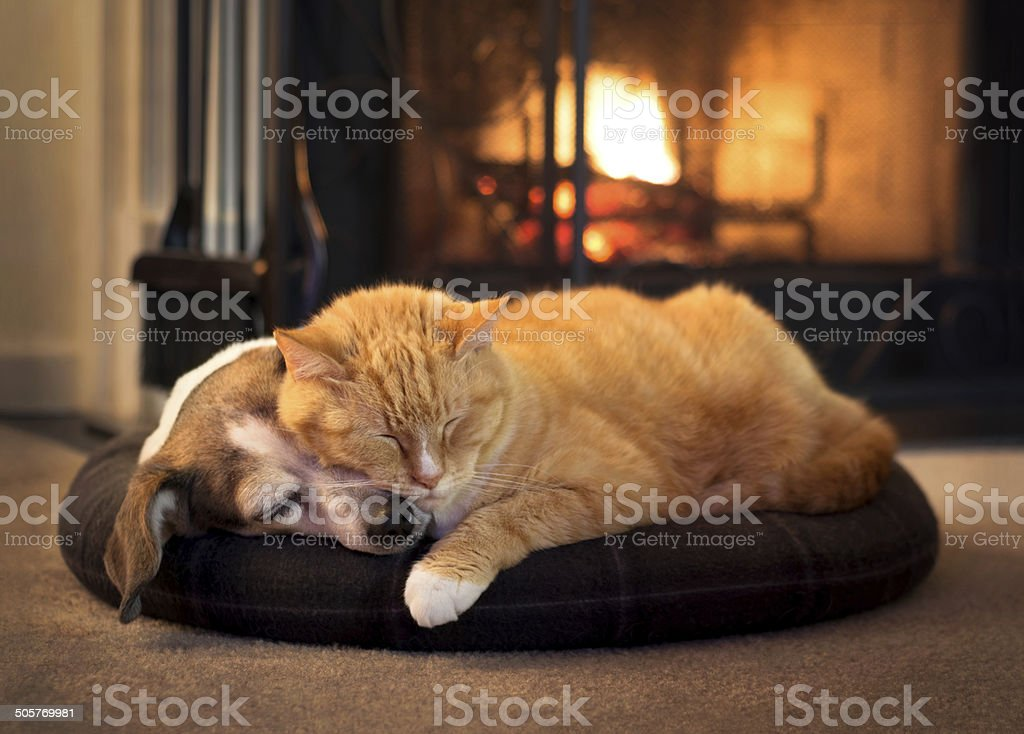 cat and dog by the fireplace stock photo