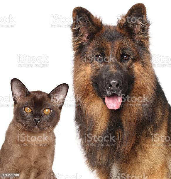 Cat and dog closeup isolated picture id476229758?b=1&k=6&m=476229758&s=612x612&h=vwkmdaxhxgp3czjxevhz3tkw5ggr8yp4ko5zejpn4oe=