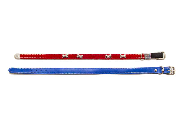 cat and dog collar isolated on white - cat leash stock photos and pictures