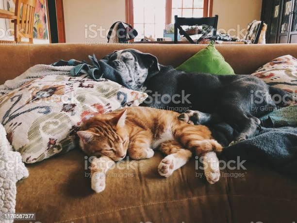 Cat and dog cosleeping picture id1176587377?b=1&k=6&m=1176587377&s=612x612&h=iizh cgnkhjcgpexhiwpfhbszutgw2ikx1gpoau2tru=