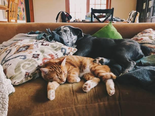 Cat and dog cosleeping picture id1176587377?b=1&k=6&m=1176587377&s=612x612&w=0&h=1jsluquodvbxt ehrqayvbd6gjmplz7recdckq v30e=